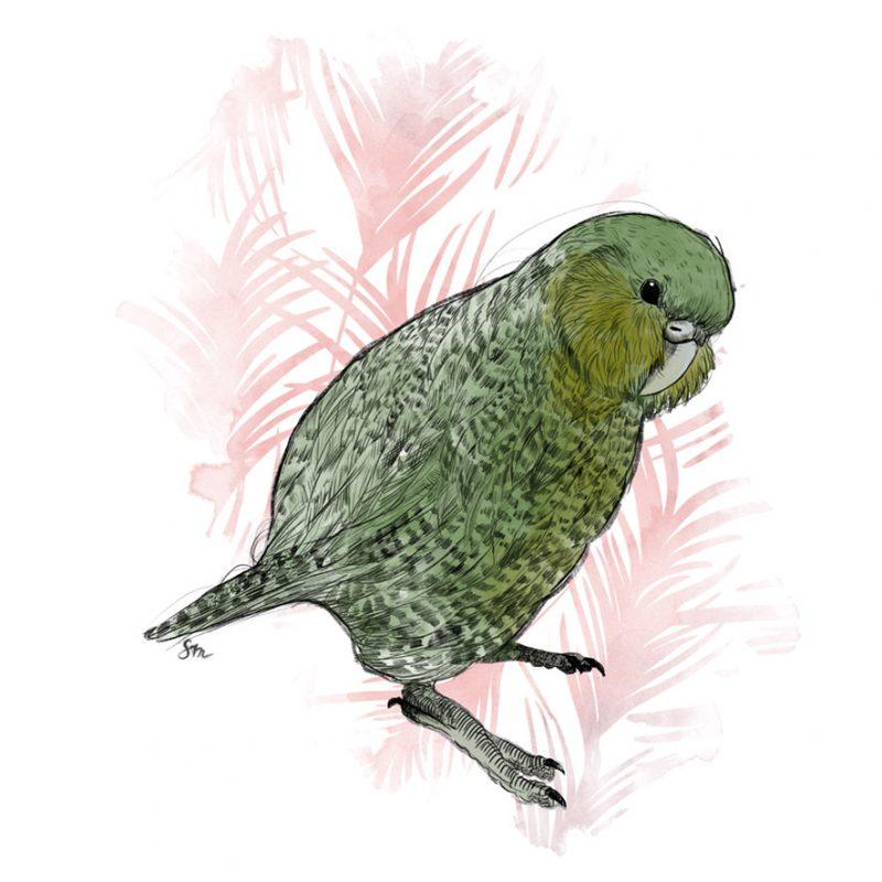 Kakapo mit pinknen Palmblättern im Hintergrund